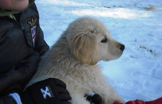 addestramento-cani-catania-cane-educato-4
